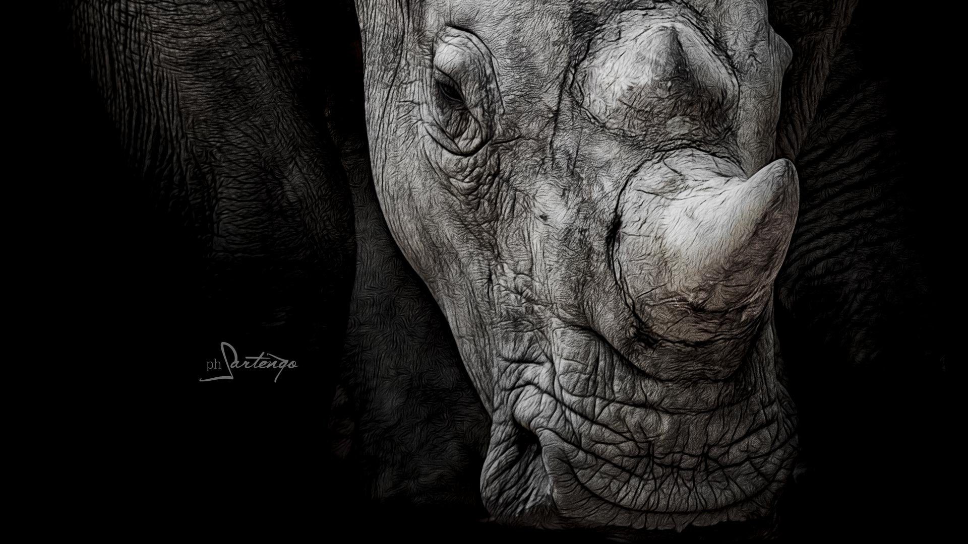 Bracconaggio, la PPA lotta duramente per salvare i rinoceronti.
