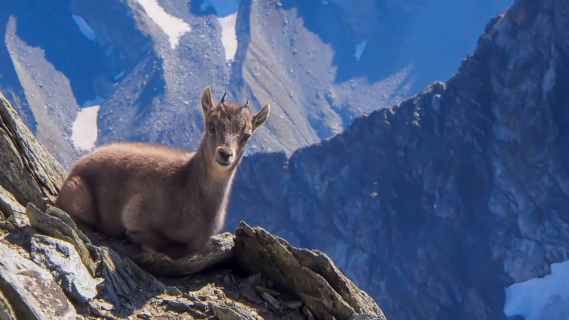 Ecco le dieci specie a rischio in Italia