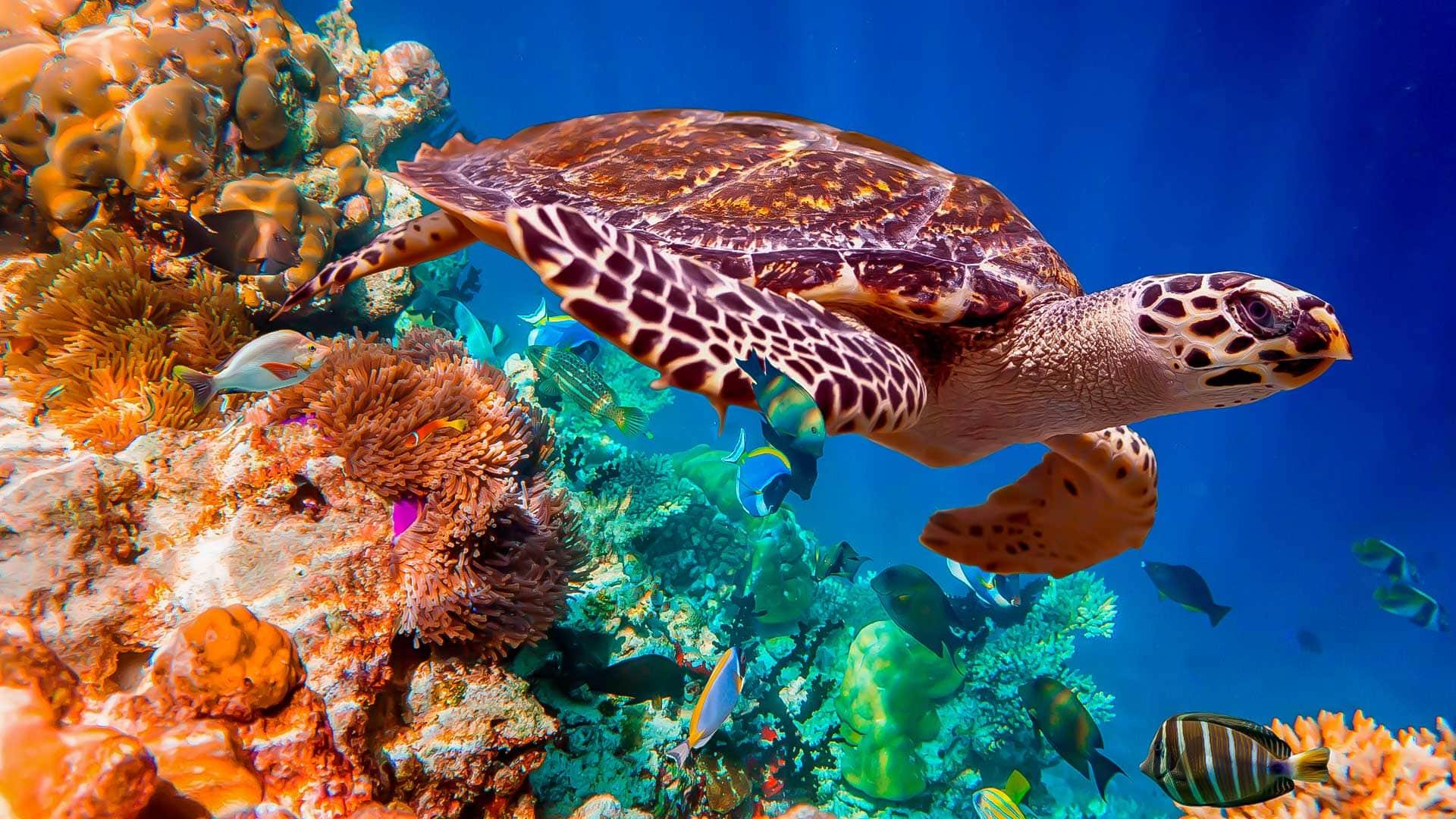 Otto specie acquatiche che potrebbero estinguersi entro cento anni