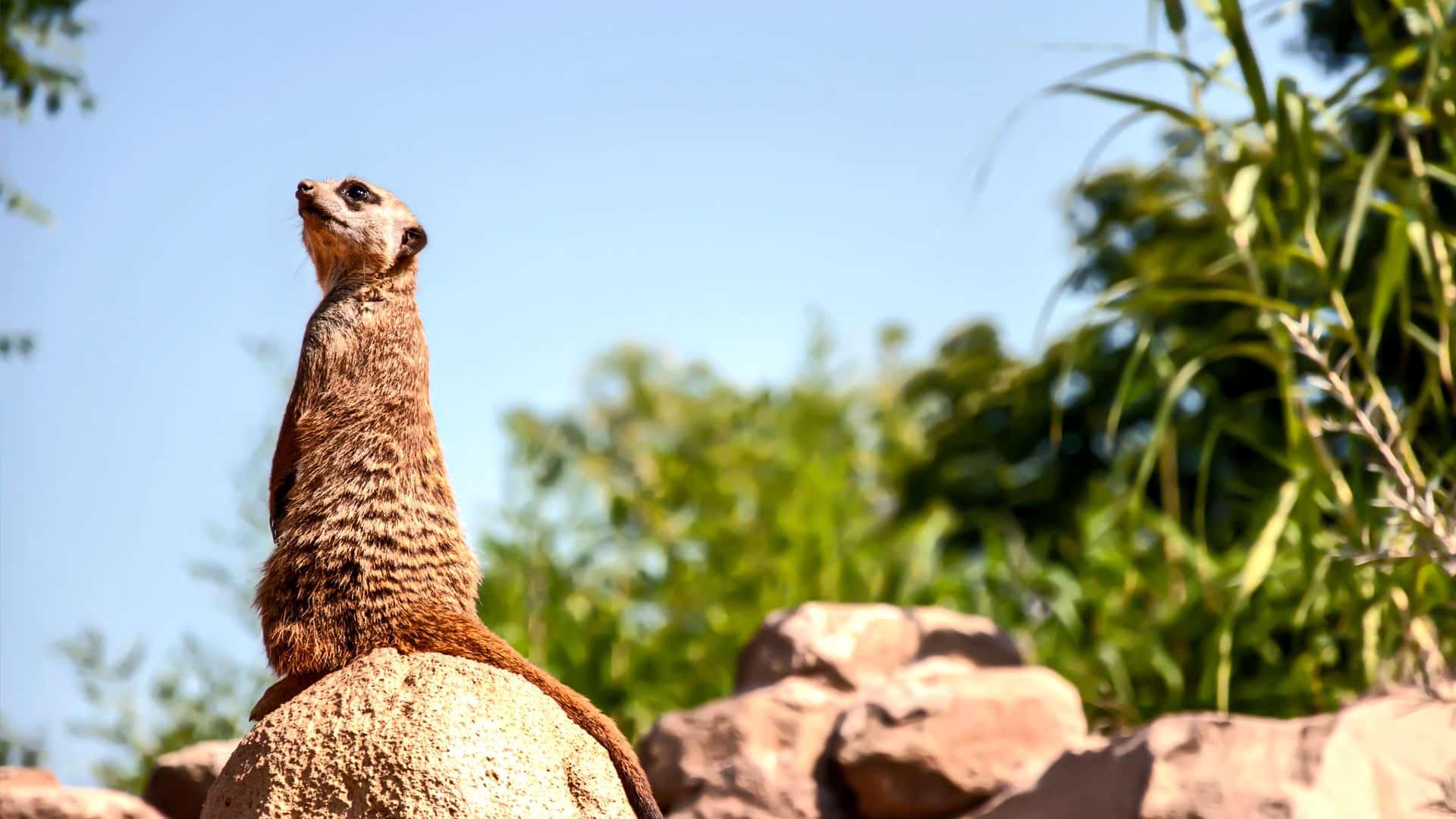 L'importanza dei parchi zoologici nella conservazione delle specie animali