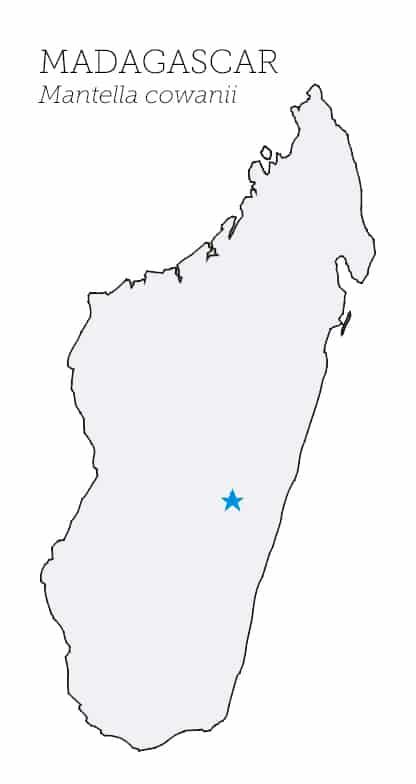 Mappa Mantella Cowanii