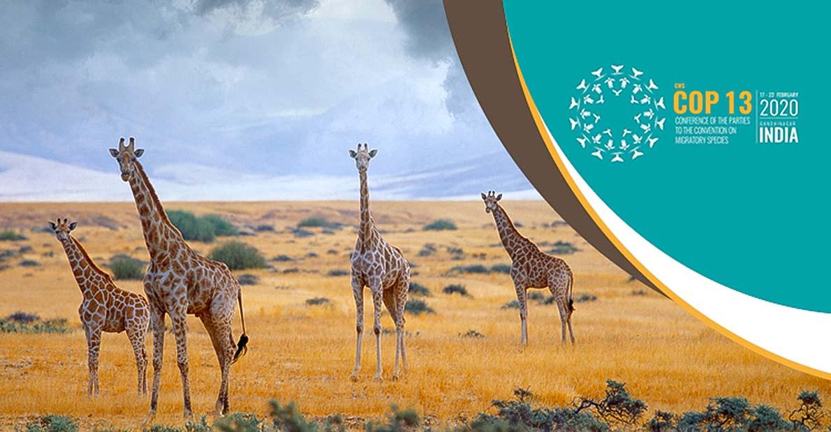 La giraffa si è estinta in 7 paesi. La strategia di conservazione in Africa