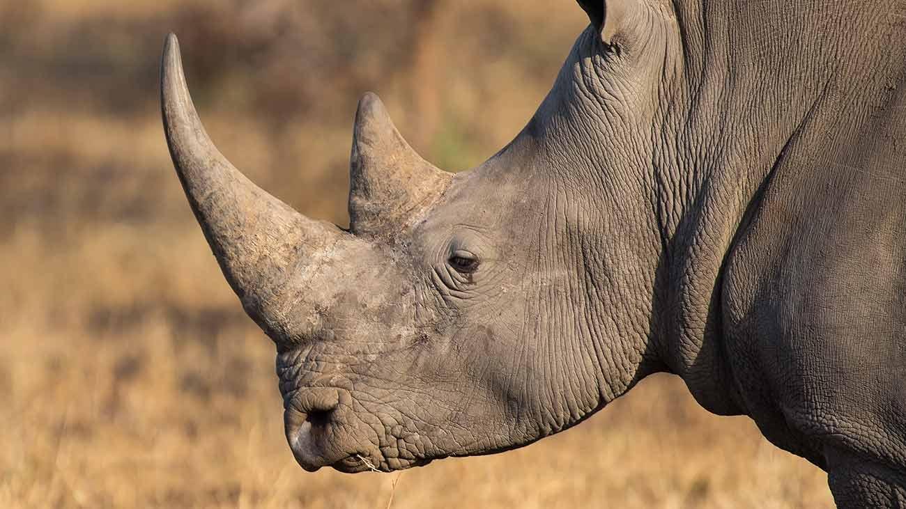 COVID 19 in Africa. La situazione da gennaio 2020 ad oggi
