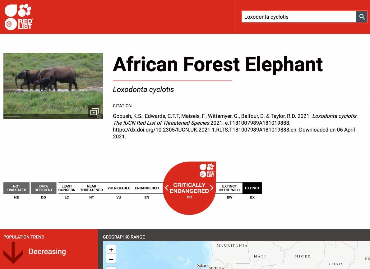 IUCN REDLIST | Gli elefanti delle foreste africane sono CRITICALLY ENDANGERED