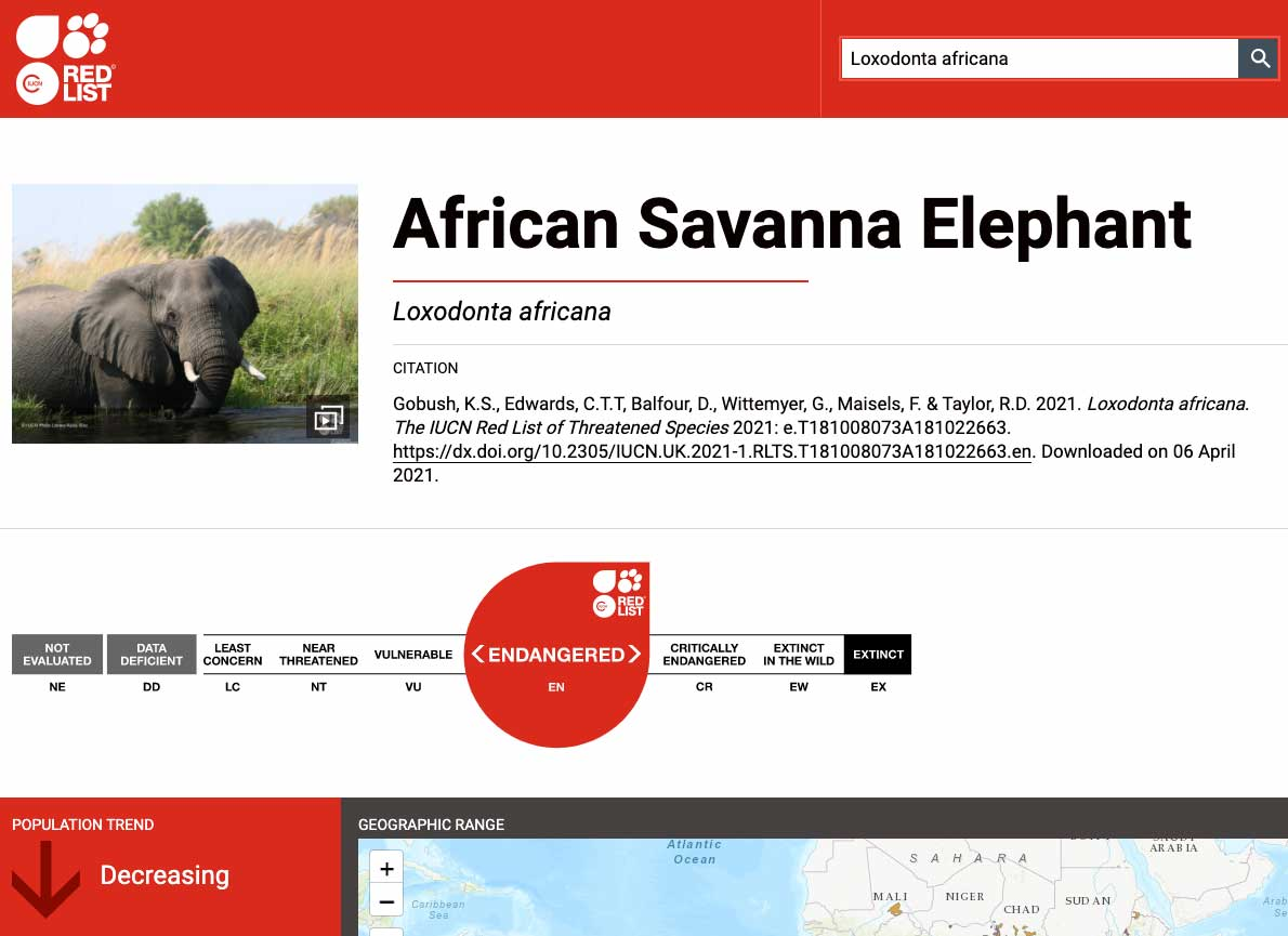 IUCN REDLIST | Gli elefanti della savana africana sono ENDANGERED